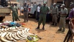 More Help for Endangered Elephants