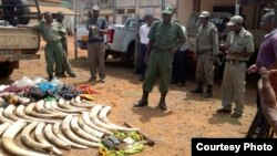 Mozambican police apprehend ivory traffickers.