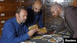 El paleontólogo Cristiano Dal Sasso (izquierda) y los coautores Simone Maganusco y Andrea Cau (derecha) examinan los huesos del dinosaurio jurásico Saltriovenator en el Museo de Historia Natural de Milán, Italia, el 18 de diciembre de 2018.