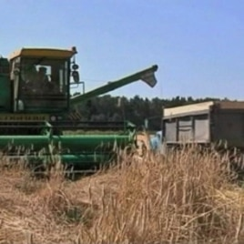 Wildfires destroyed one-third of Russia's wheat harvest last summer, cutting off Russian wheat exports, which caused prices to shoot up.