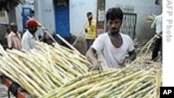 印度食糖产量下滑 国际糖价上升