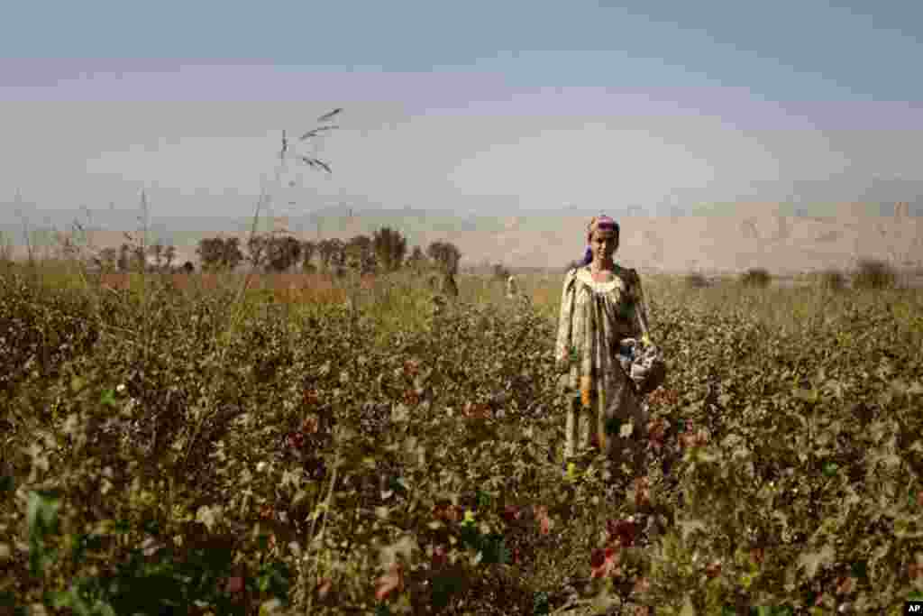 A young cotton picker stands in the fields outside of Dushanbe, Tajikistan. (VOA - Y. Weeks)