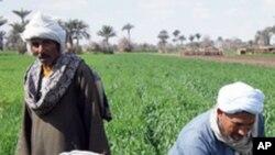 افغانستان میں زراعت کو جدید بنانے کی کوششیں