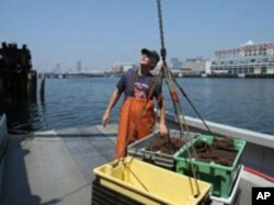 After a long day, Skip Ryan prepares to take his lobster catch to a buyer.