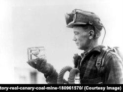 คนงานเหมืองในสหรัฐฯ แคนาดา และอังกฤษ ต้องนำนกขมิ้น (Canary) ไปในเหมือง เพื่อเตือนภัยหากมีก๊าซพิษรั่วไหล