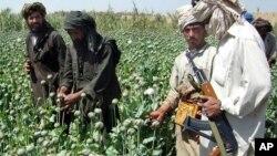 در یک ماه گذشته ۲۹ لابراتوار مخدرات طالبان تخریب شده است