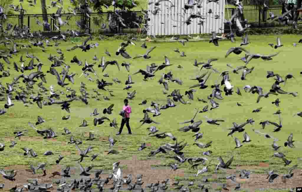 عبور پسر پیاده از نزديکی کبوترها در شهر بمبئی، هند. (AP)