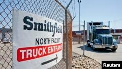 货运大卡车行驶在史密斯菲尔德公司厂区