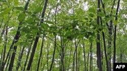 Tro núi lửa bảo quản một khu rừng nhiệt đới cổ 300 triệu năm