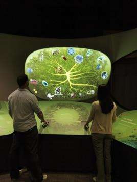 Visitors explore the human genome and ancient genomic history. (Donald E. Hurlbert & James Di Loreto, Smithsonian)