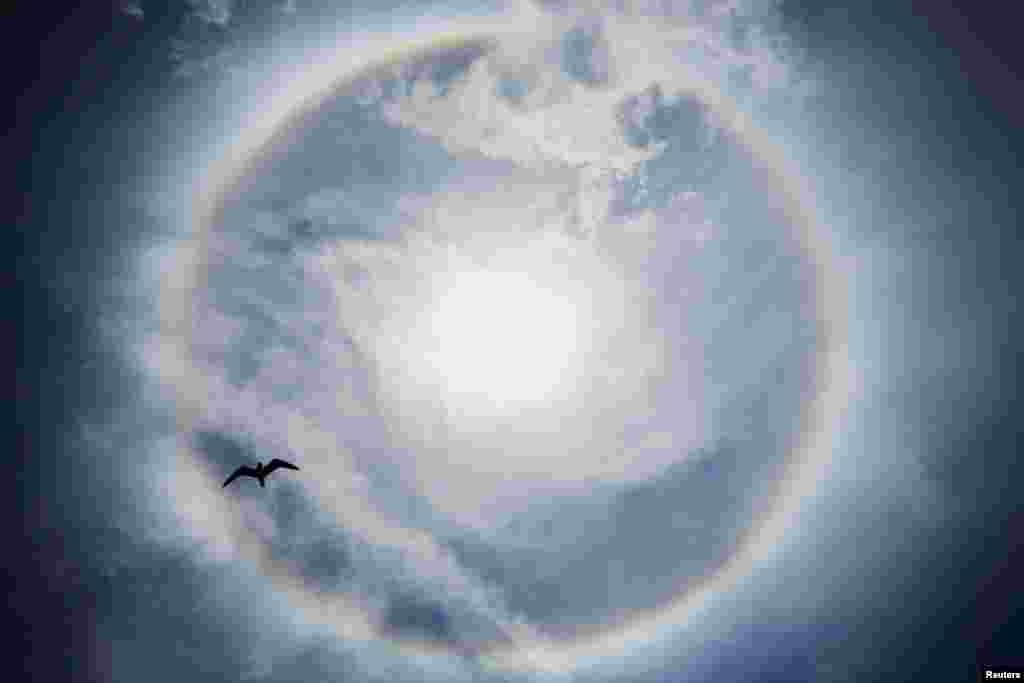 """Cánh chim bay dưới bầu trời thành phố Seaside Heights, tiểu bang New Jersey, Hoa Kỳ vào lúc bầu trời đang có hiện tượng mà giới dự báo thời tiết gọi là """"sun dog."""""""