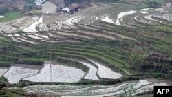 Công ty đã có được 120.000 hecta đất để trồng cây bạch đàn trong tỉnh Quảng Tây của Trung Quốc