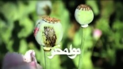 Narcotics - Drug addicts in Herat