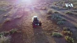 Arizona çöllüklərində
