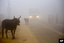 FILE - Cows stand by the side of a road as a truck drives with lights on through smog in Greater Noida, near New Delhi, India, Nov. 8, 2017.