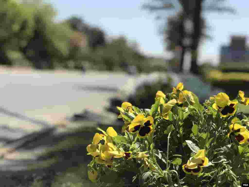 شہرِ لاہور میں واقع مین بلیوارڈ پر سڑک کنارے پھول دار پودے لگائے گئے ہیں۔