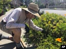 Tetangga juga bisa ikut melepaskan stres dengan jalan-jalan melihat kebun di rumah warga sekitar.