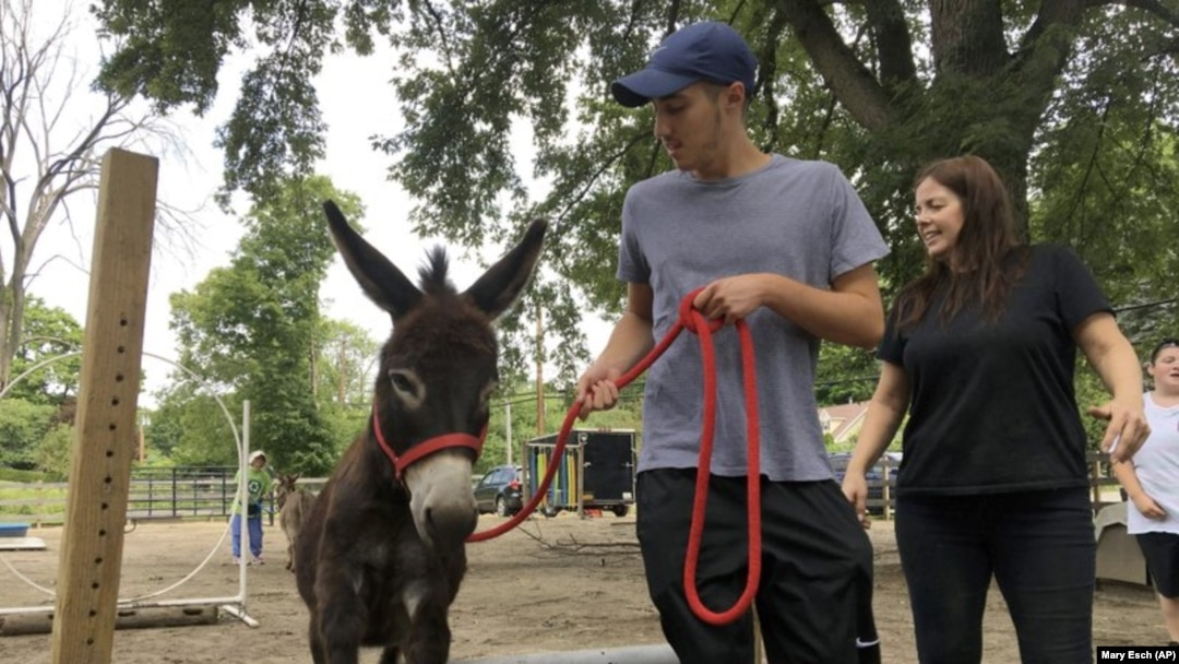 Donkeys Help Humans Feel At Ease