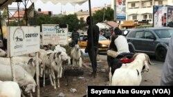 A Dakar, les riverains, les voitures et les moutons cohabitent, Sénégal, le 10 août 2019. (VOA/Seydina Aba Gueye)