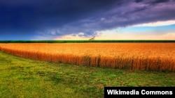 여름이 찾아온 미국 캔자스주의 밀 밭.