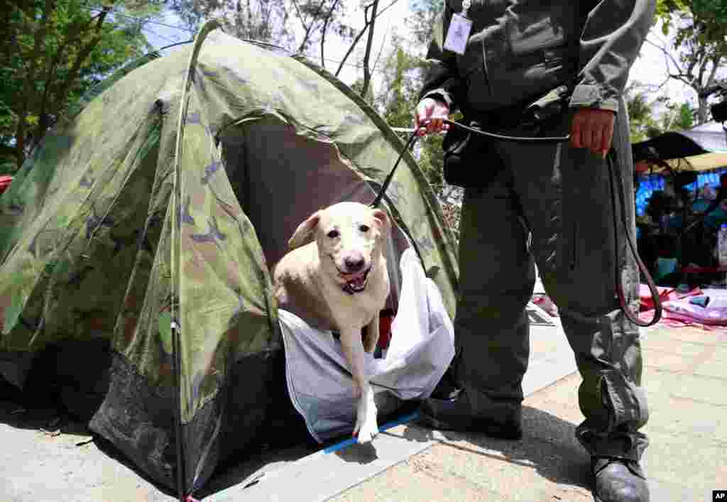 A Thai policeman and his dog search the tent of a pro-government protester during a cleanup operation at a pro-government demonstration site on the outskirts of Bangkok, May 23, 2014.