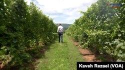 Matthieu Finot, Winemaker