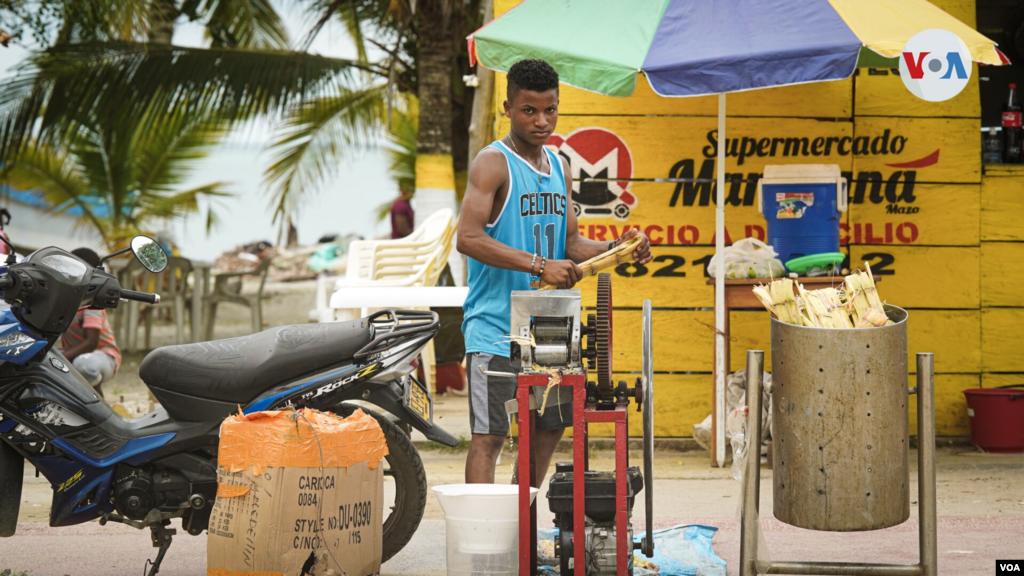La caña de azúcar es uno de los productos más consumidos por los migrantes cubanos y haitianos en el puerto de Necoclí, quienes empacan este tradicional producto agrícola para consumirlo en su travesía por la selva del Tapón del Darién.