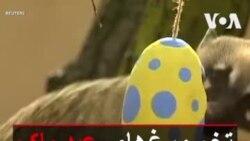 تخم مرغهای عید پاک برای بازی حیوانات در باغوحش لندن