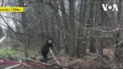 Cảnh sát giải cứu nai mắc sừng vào lưới khung thành