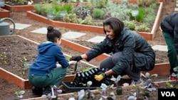 Michelle Obama sembró su popular jardín en la Casa Blanca con la ayuda de niños.