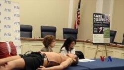 美议员:军队应停止使用动物训练医疗急救