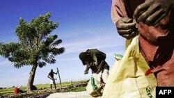 Thung lũng Artibonite là trung tâm sản xuất lúa gạo của Haiti