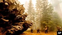 "Petugas pemadan kebakaran bekerja keras melindungi jalan setapak ""Trail of 100 Giants"" di hutan nasional Sequoia, California, dari ""Windy Fire"", 19 September 2021. (AP Photo/Noah Berger)"