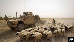 ظاهر عظیمی: سرحد رسمی بین افغانستان و پاکستان وجود ندارد