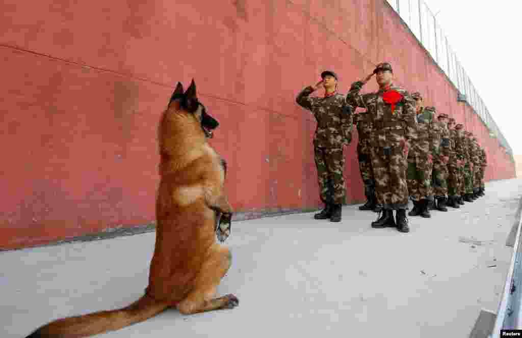 Seekor anjing militer ikut berdiri saat pasukan patroli memberi penghormatan kepada pos mereka sebelum beristirahat di Suqian, Jiangsu, China.
