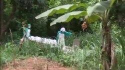 Ebola VO