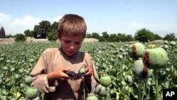 حدود یک میلیون طفل در افغانستان به مواد مخدر معتاد اند