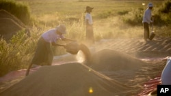 FILE - Myanmar farmers lay paddy for ventilation. The NLD promises to improve conditions for Myanmar's agricultural workers.
