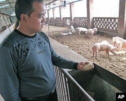 陳七三和他的豬場