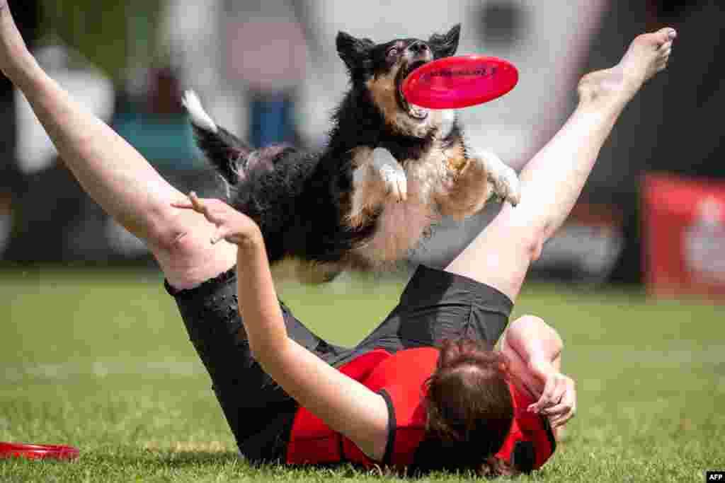 មនុស្សម្នាក់ និងសុនខរបស់គាត់ចូលរួមក្នុងការប្រកួត Dogfrisbee នៅក្នុងក្រុង Erftstadt ប្រទេសអាល្លឺម៉ង់។
