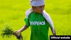 绿色和平关注转基因大米 (图片来源:绿色和平)