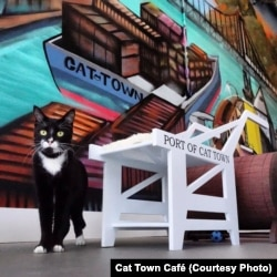 Tiny, seen in this Oct. 11, 2014 photo, is one of the cats waiting for a new home at Cat Town Café.