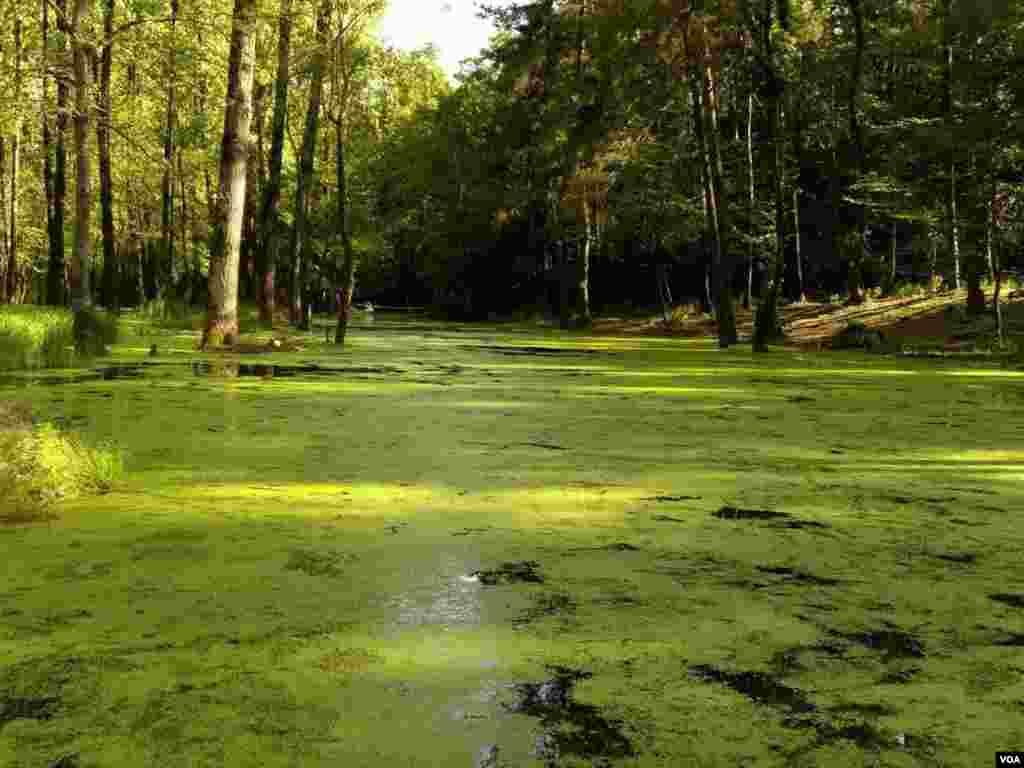 پارک جنگلی سراوان رشت- گیلان عکس: مهیار (ارسالی شما)