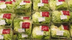 Lettuce at a supermarket in Switzerland. Why buy when you could grow it yourself?