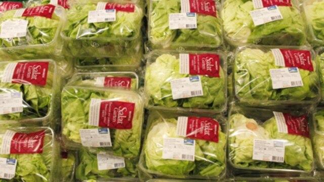 Sayuran berdaun hijau seperti selada merupakan penyebab utama keracunan makanan di AS. (Foto: Dok)