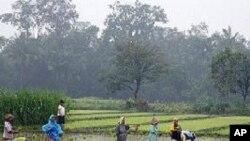 모내기를 하는 동남아시아의 농민들 (자료사진)
