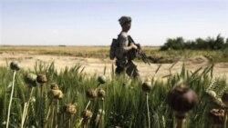کاهش تولید تریاک در افغانستان
