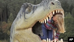 Ten-year old Adele Anhalt inspects the mouth of a model of a dinosaur in the exhibition 'World of Dinosaurs' in Hohenfelden near Erfurt, central Germany, September 25, 2012.