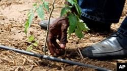 آبیاری قطره ای آب را به ریشه نبات رسانیده و از ضیاع آن جلوگیری می کند