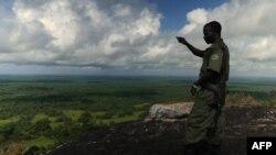 Une forêt au Mozambique